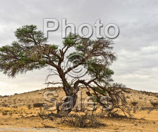 TREES COLOUR